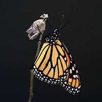 Monarch200x200