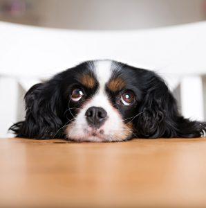 pitiful dog